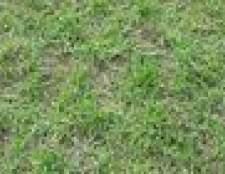 Como crescer grama em uma encosta