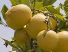 Como crescer árvores de limão em espanha