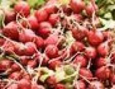 Como a crescer a partir de sementes de rabanetes