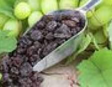 Como crescer uvas sem sementes thompson