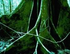 Como curar uma árvore girdled