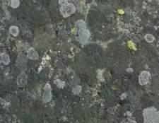 Como identificar o molde preto e marrom