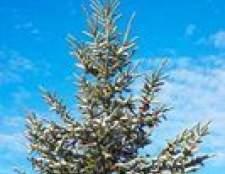 Como identificar árvores verdes em wisconsin