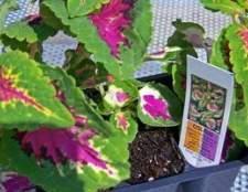 Como identificar plantas de casa com folhas grandes