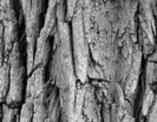 Como identificar árvores de frutos vermelhos em Ohio