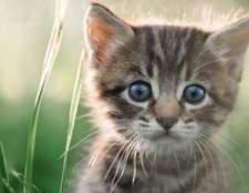 Como introduzir um gatinho a um gato
