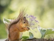 Como manter os esquilos das flores comer