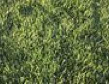 Como matar a grama de caranguejo existente