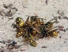 Como matar insetos voadores