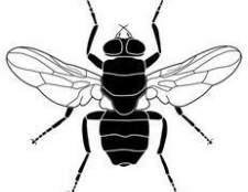 Como matar moscas domésticas