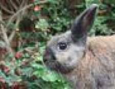 Como matar coelhos para a carne