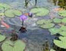 Como alinhar uma lagoa com argila