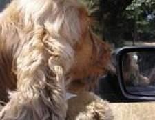 Como fazer uma tampa de assento do carro para cães