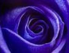 Como fazer uma rosa roxa