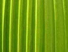Como fazer folha de palmeira chapéus