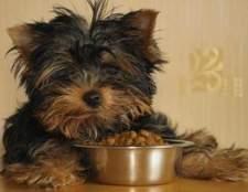 Como fazer com que seu cão mastigar sua comida