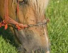 Como fazer o seu próprio cavalo inseto pulverização com óleos essenciais