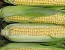 Como descascar milho