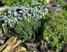 Como plantar um jardim de Inverno no Tennessee