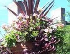 Como plantar sementes de flores em vasos