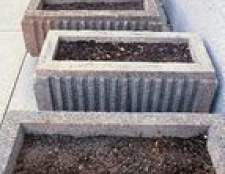 Como plantar e colheita das sementes de chia