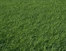 Como preparar seu quintal para sod