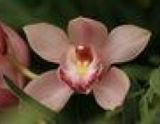 Como preservar um buquê de orquídeas