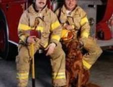 Como comprar máscaras de oxigênio de emergência para animais de estimação