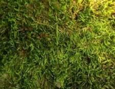 Como remover o musgo de telhas com sulfato de cobre