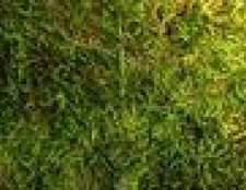 Como remover o musgo que cresce nas calçadas de concreto e telhas das casas