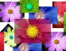 Como salvar imagens do controle picturebox no visual basic