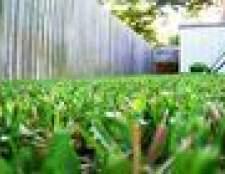 Como iniciar um negócio roçada do gramado para as crianças
