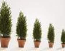 Como cuidar de árvores verdes