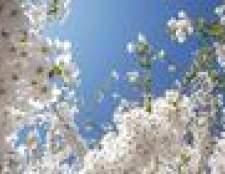 Como saber se uma árvore de pera de bradford está morrendo