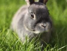 Como saber se um coelho está tendo uma convulsão?