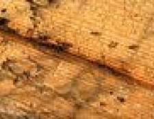 Como dizer a diferença entre as formigas de fogo e formigas regulares