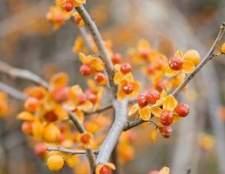 Como usar ramos agridoces em um arranjo floral