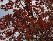 Como podar árvores de faia