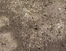 Hidrossemeadura vs. sementes de capim Plantação