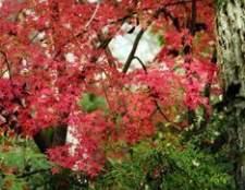 Folhas estão caindo fora de meu bordo japonês