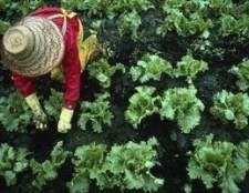 Lista de plantas queda para plantar para alimentar