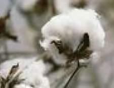 Lista de estados que têm campos de algodão