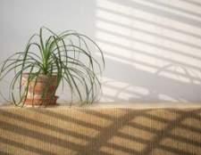 Plantas com longas e finas folhas