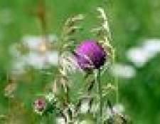 instruções de mistura de herbicida corsário