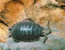 Controle de pragas orgânico para bugs pílula