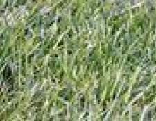 Plantando sementes de capim em novembro