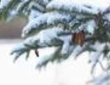 As plantas que vivem em climas frios