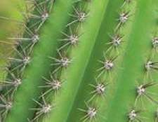 Plantas que armazenam água