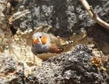 Passo-a-passo para fazer birdhouses