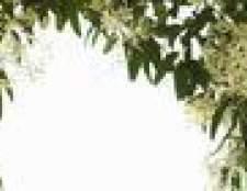 As melhores plantas perenes de escalada